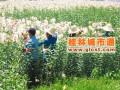 资源县利用资源促农业快速提升 农民收入大幅增长