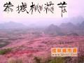 2017桂林恭城第十五届桃花节2月25日开幕